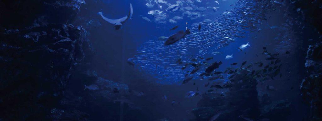深海から見た海